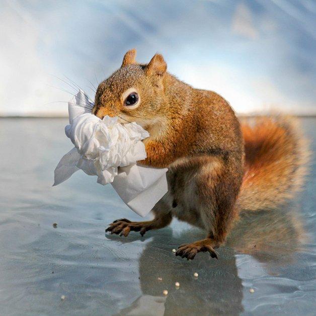 NancyRoseSquirrels11