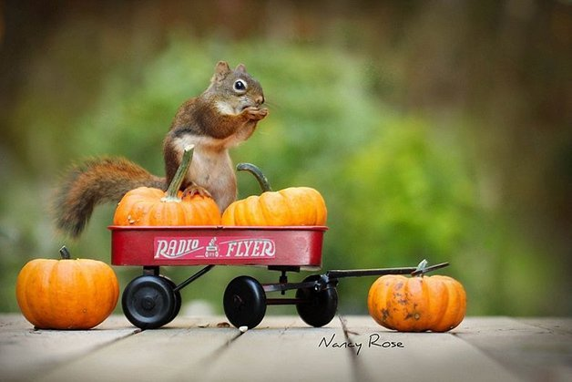 NancyRoseSquirrels3