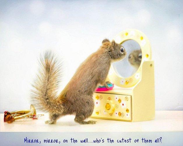 NancyRoseSquirrels4