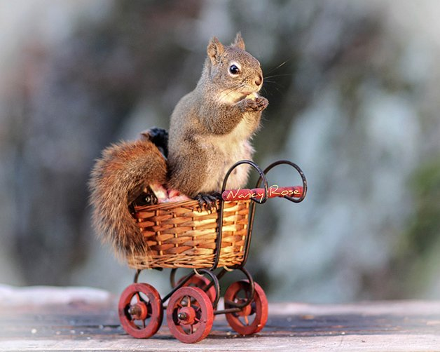 NancyRoseSquirrels5