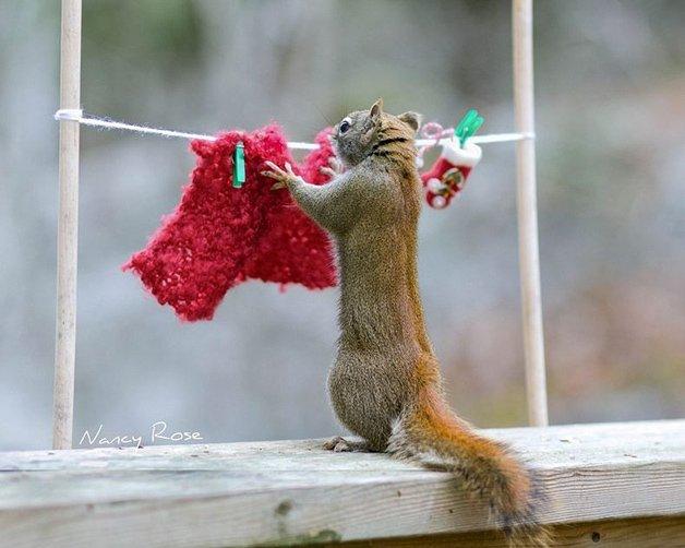 NancyRoseSquirrels6