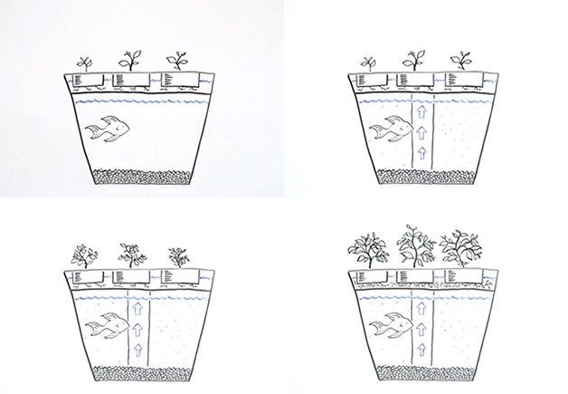 AquaponicsGarden5