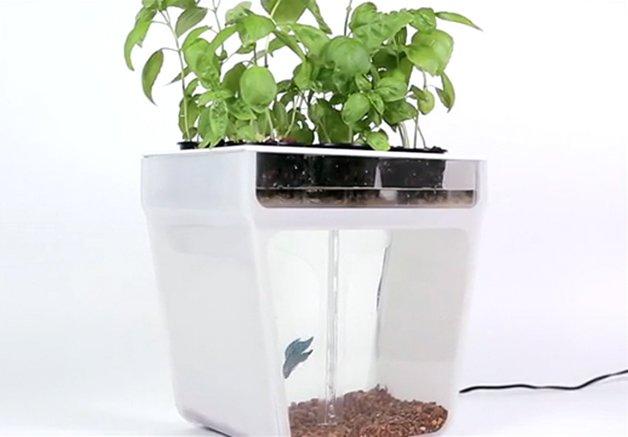 AquaponicsGarden8