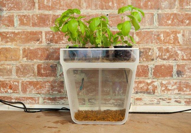 O vaso que é horta e aquário ao mesmo tempo