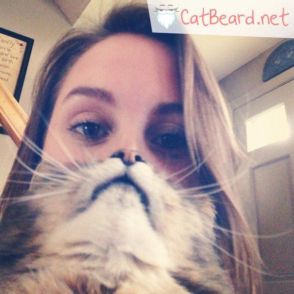 CatBearding1