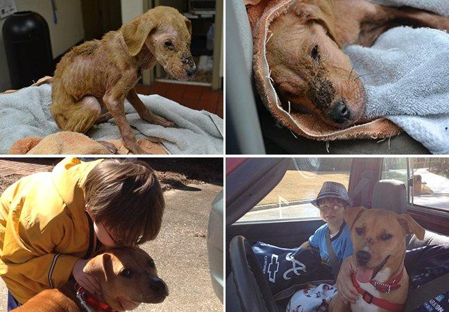 Como uma cachorra resgatada em estado terminal mudou vida de um garoto autista