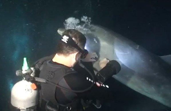 Golfinho pede ajuda a mergulhador para desenroscar anzol na nadadeira