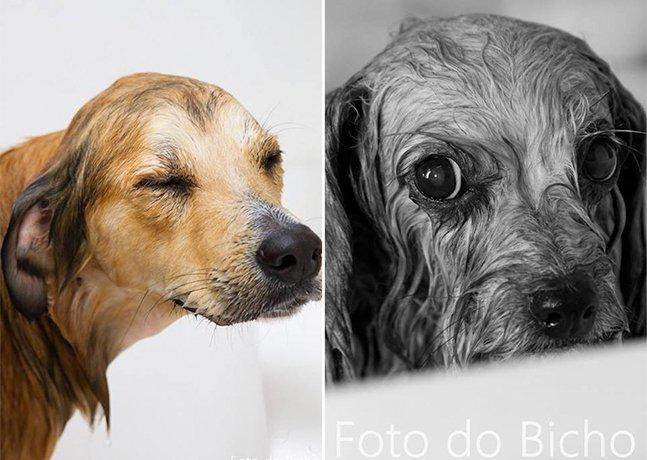 Ensaio fotográfico divertido mostra cachorros saindo do banho
