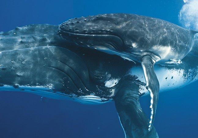 As fotos mais incríveis de baleias em tamanho real que você já viu