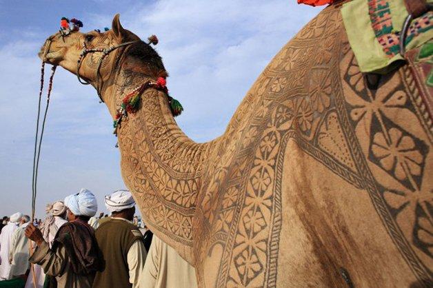 CamelArt2