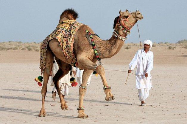 CamelArt4
