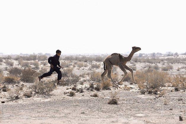 CamelArt6