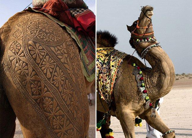 Conheça a complexa arte feita em camelos em festival indiano