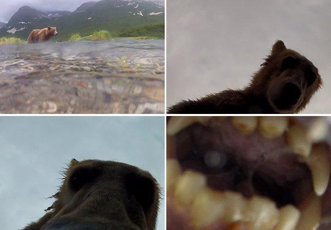 Vídeo mostra a sensação de ser comido por um urso pardo