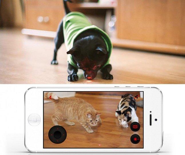 Gadget permite brincar com seu pet (e de outras pessoas) à distância