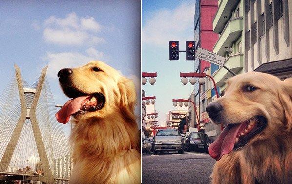 Série de fotos mostra o cão que mais passeou pelas ruas de SP