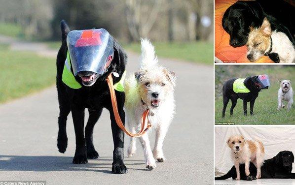Cachorro vira cão-guia de labrador cego e prova que cães são mesmo amigos fiéis