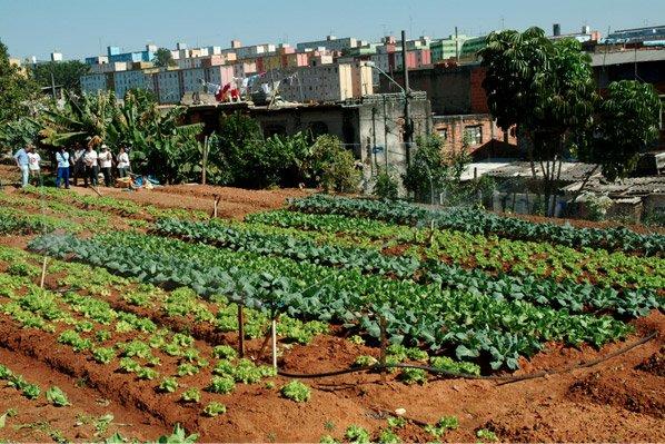 Projeto usa áreas abandonadas em SP pra trazer comida e emprego pras pessoas
