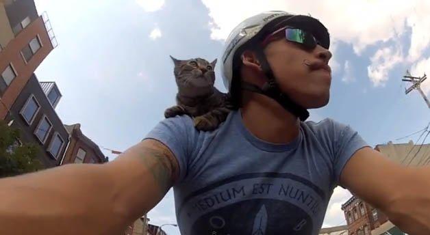 gato_bike