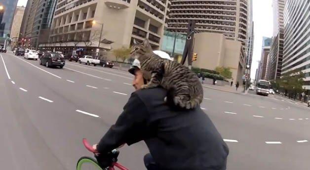 gato_bike7