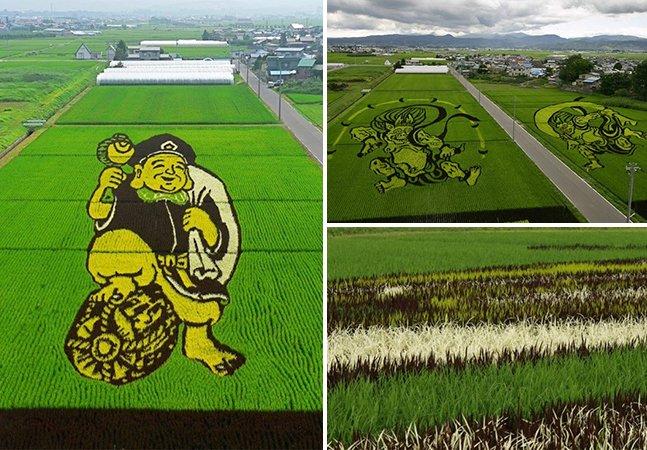 Agricultores usam campos de arroz para criar fantásticas obras de arte