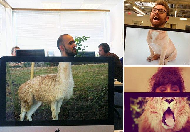 O novo meme é transformar colegas de trabalho em animais selvagens