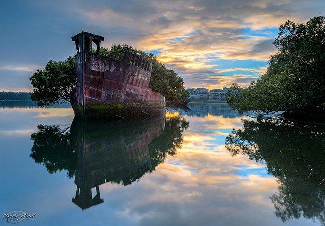 O navio de 102 anos que se transformou em uma mini floresta