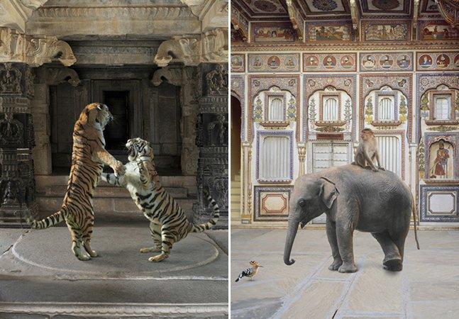 Fotógrafa capta animais selvagensem locais sagrados na Índia