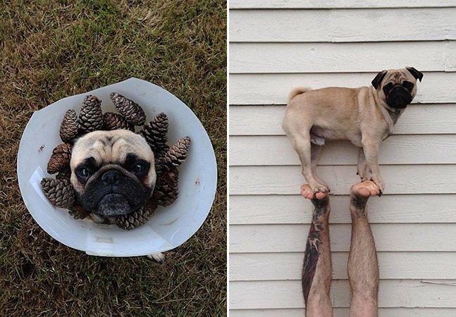 Você também vai se apaixonar pelo cão que está fazendo sucesso no instagram