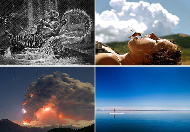 Veja algumas das melhores fotos do concurso da National Geographic