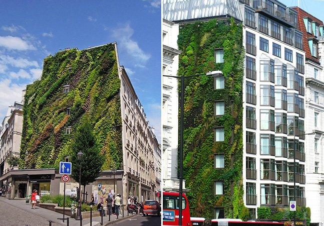 Botânico viaja pelo mundo construindo jardins verticais em diversas cidades