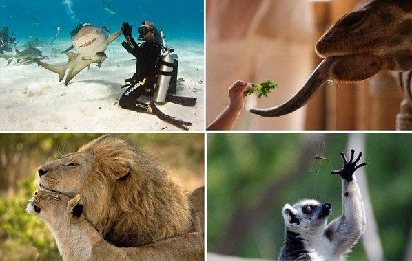 15 fotos de animais nas quais o fotógrafo estava no lugar certo e na hora certa