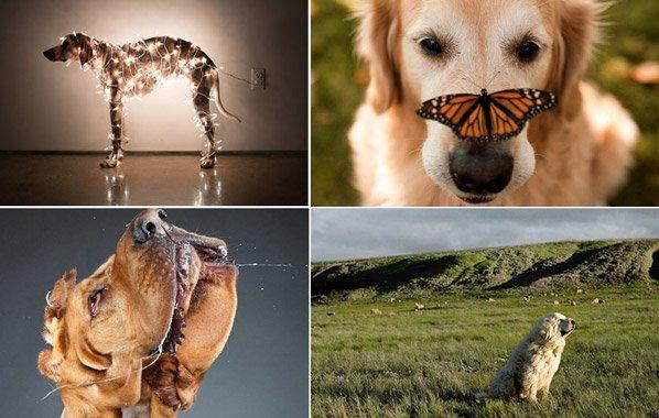 Se você acha que foto de cachorro é tudo igual, conheça 6 ensaios criativos