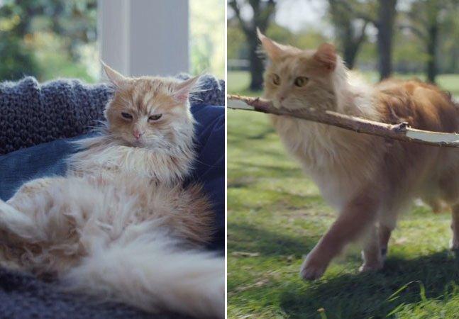Gato descobre as vantagens de ser um cão em propaganda divertida