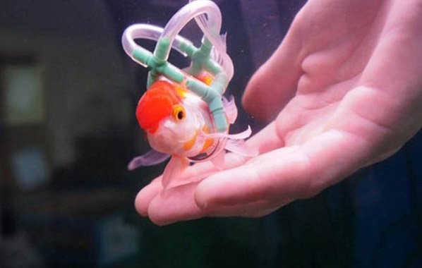 Jovem cria aquário adaptado para o seu peixe com deficiência