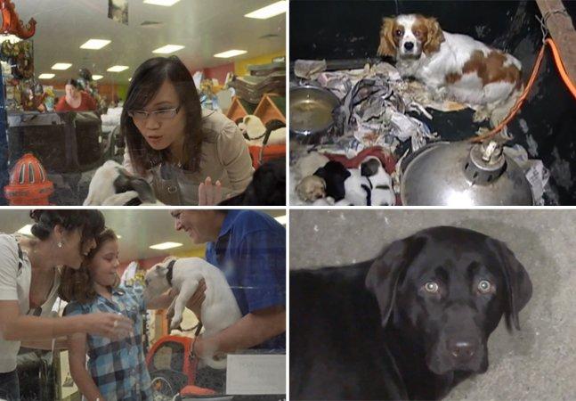 Você nem imagina de onde veio seu cão antes de comprá-lo numa loja de animais