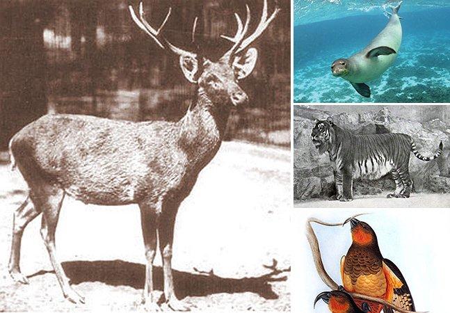 Veja fotos de 15 animais que foram extintos nos últimos 250 anos