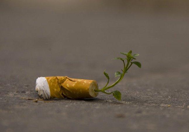 Designer cria cigarro biodegradável com semente de flor dentro