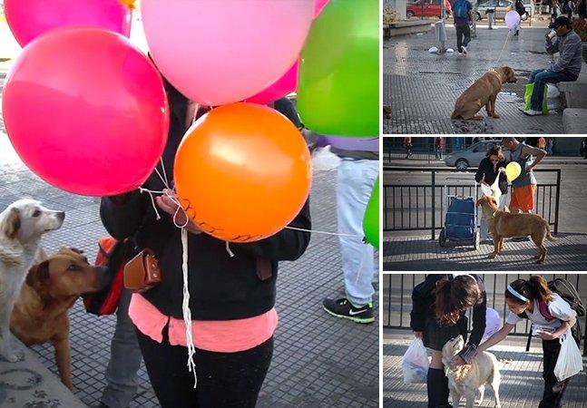Ação criativa faz com que cachorros de rua deixem de ser invisíveis