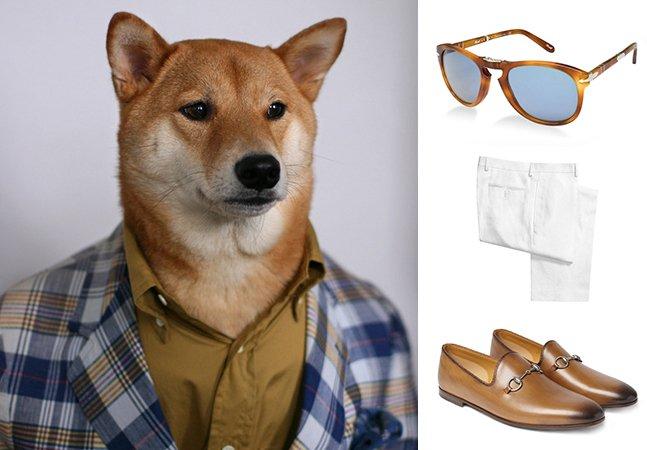 Conheça o cachorro que dá dicas de moda para homens
