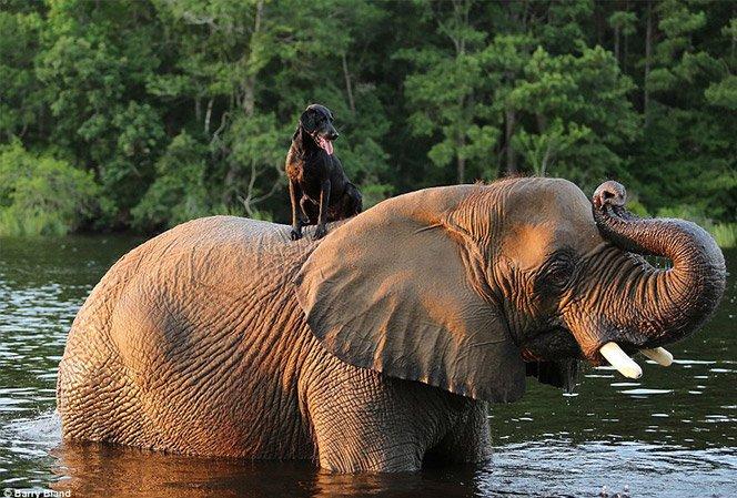 A adorável amizade entre uma cachorra e uma elefanta que ganhou o mundo