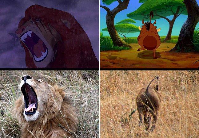 Fotógrafo capta imagens reais que reproduzem cenas do filme Rei Leão