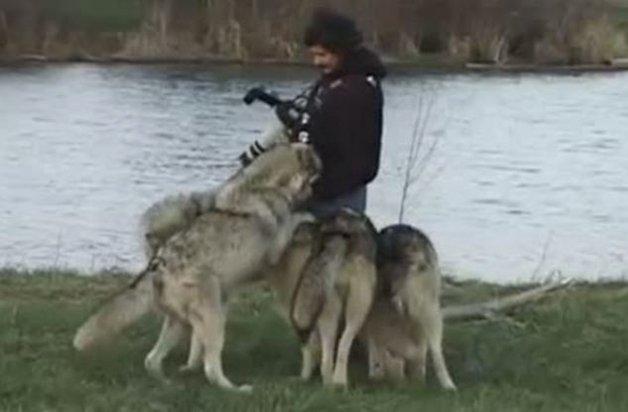 WolfPark1