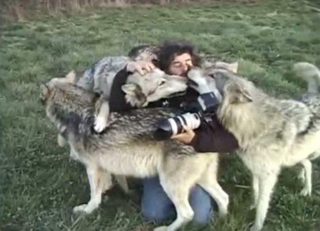 WolfPark6