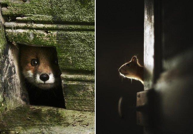 Fotógrafo registra casas abandonadas que viram lar de animais selvagens