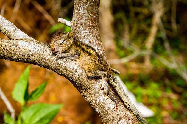 AbandonedSquirrel1