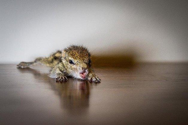 AbandonedSquirrel11