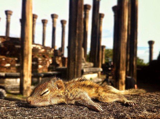 AbandonedSquirrel2
