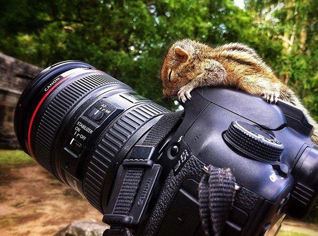 AbandonedSquirrel6