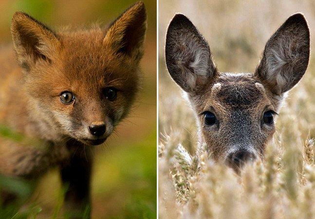 Você não vai acreditar que essas fotos de animais selvagens foram feitas sem zoom